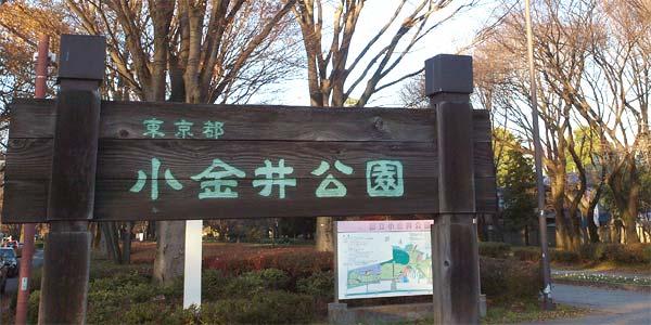 小金井公園・槻の木広場(つきのき)はローラースケート、インラインスケートが利用できる公園